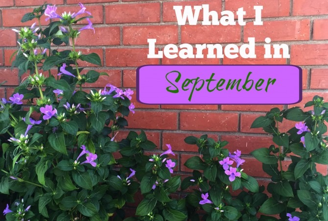 What I Learned in September
