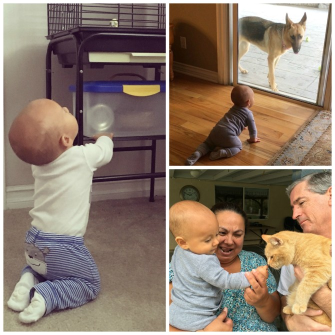 Charlie and Animals