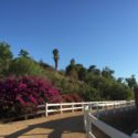 Cinco de Wednesday: Dreaming of California