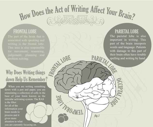 Writing and the Brain
